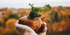 Raw Potato in juicer