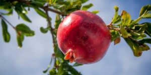 Whole Pomegranate in juicer